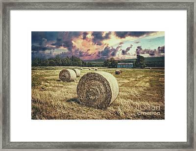Harvest Framed Print by Evelina Kremsdorf