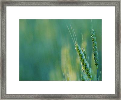 Framed Print featuring the photograph Harvest Hues by Blair Wainman
