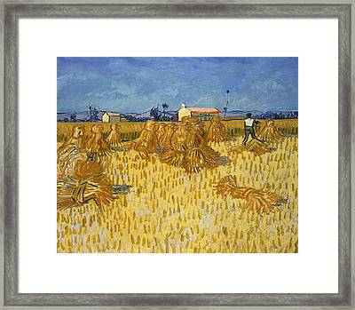 Harvest In Provence Framed Print
