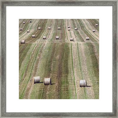 Harvest  Framed Print by Joana Kruse