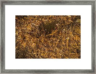 Harvest Leftovers Framed Print