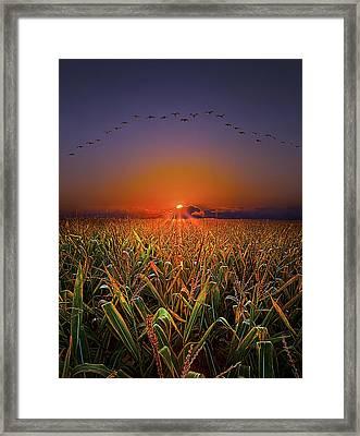 Harvest Migration Framed Print by Phil Koch