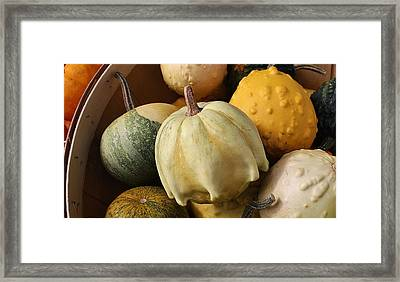 Harvest Of Gourds Framed Print by Bruce Bley