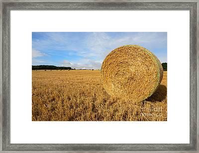 Harvest Framed Print by Nichola Denny
