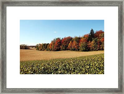 Harvest Time Framed Print by Debbie Oppermann