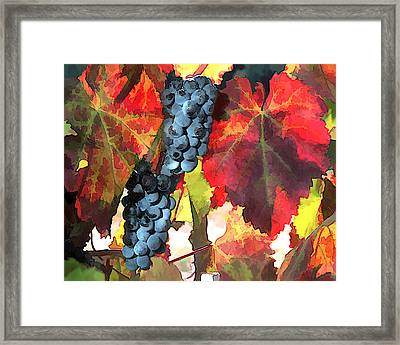Harvest Time Grapes And Leaves Framed Print by Elaine Plesser