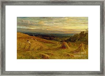 Harvest Time In Sussex Framed Print