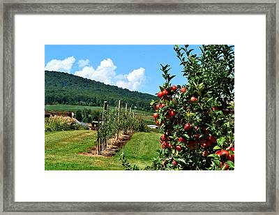Harvest Time In The Catoctin Mountains Framed Print