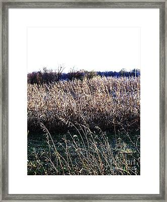 Harvest Time In The Midwest Framed Print by Marsha Heiken