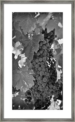 Harvest Time Framed Print by Nancy Ingersoll