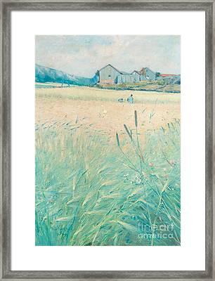 Harvest Time On The West Coast Of Sweden Framed Print