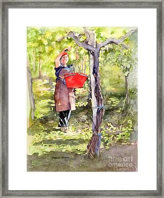 Harvesting Anna's Grapes Framed Print by Bonnie Rinier