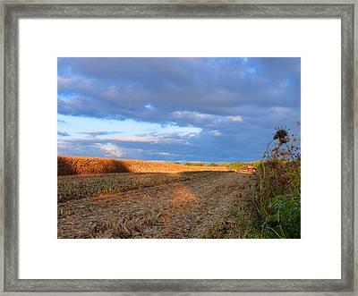 Harvesting Corn Framed Print by Tina M Wenger