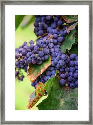 Harvesting Framed Print by Jenny Rainbow