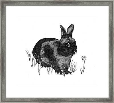 Hasenpfeffer Framed Print