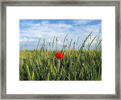Haughty Framed Print by Ioana Geacar