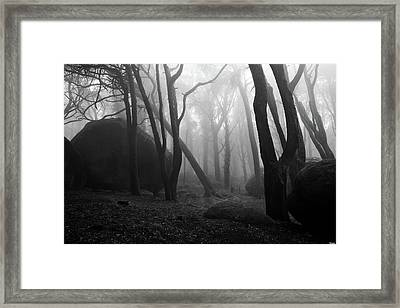 Haunted Woods Framed Print by Jorge Maia