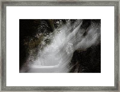 Haunting Forestry Framed Print by Frances Lewis