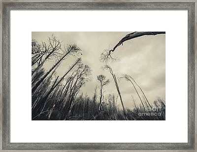 Haunting Wood Framed Print by Jorgo Photography - Wall Art Gallery