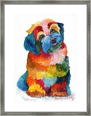 Hava Puppy Havanese Framed Print by Sherry Shipley