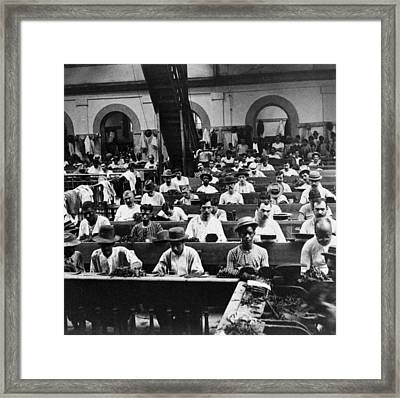 Havana Cuba - Cigars Being Rolled - C 1903 Framed Print