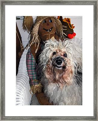 Framed Print featuring the photograph Havanese Cutie by Sally Weigand