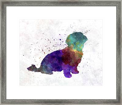 Havanese In Watercolor Framed Print by Pablo Romero
