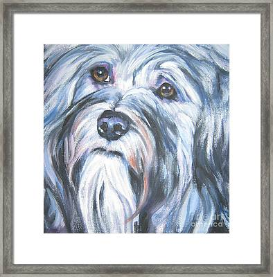 Havanese Framed Print by Lee Ann Shepard