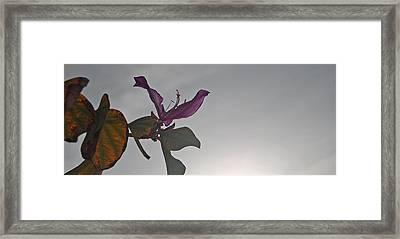 Have Faith Framed Print by Jean Booth