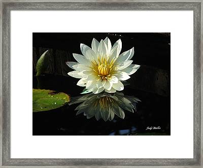 Haven Hospice Water Lily Framed Print by Judy  Waller