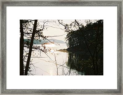 Haven Of Trees Framed Print by Kicking Bear  Productions