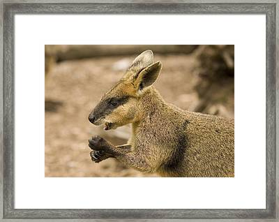 Having A Snack Framed Print by Mike  Dawson