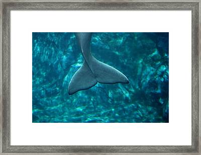 Having A Whale Of A Time Framed Print by Monteen  McCord