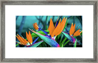 Hawaii Bird Of Paradise Flowers Framed Print