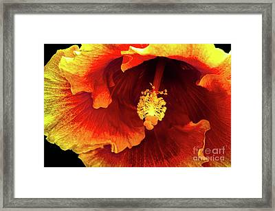 Hawaii Dreamin Framed Print