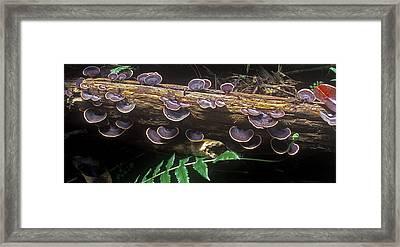 Hawaii Flora 14 Framed Print by Charlie Osborn