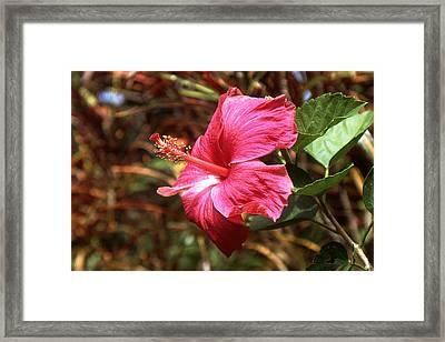 Hawaii Orchid - Flower Photo Art Framed Print by Art America Online Gallery