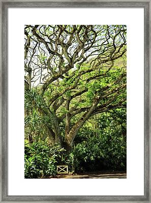 Hawaii Tree-bard Framed Print