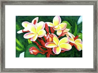 Hawaii Tropical Plumeria Flower #205 Framed Print by Donald k Hall
