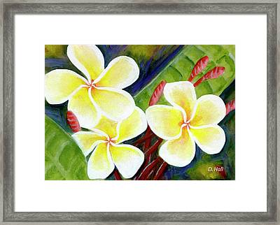 Hawaii Tropical Plumeria Flower #298, Framed Print by Donald k Hall