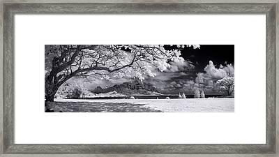 Hawaiian Blossoms Framed Print by Sean Davey