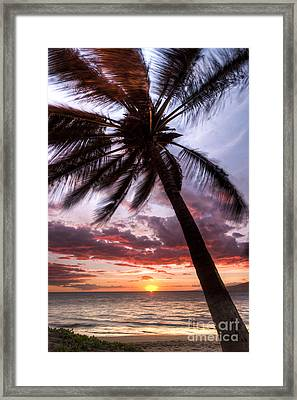 Hawaiian Coconut Palm Sunset Framed Print
