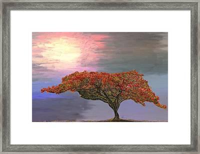 Hawaiian Flame Tree Framed Print