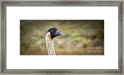 Hawaiian Goose - Nene - Head Shot Framed Print by Denis Dore