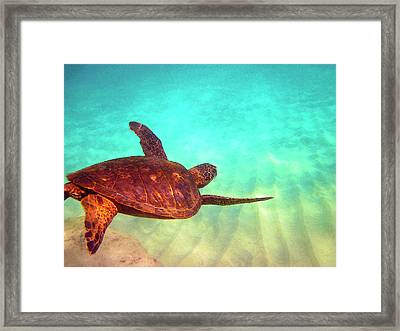 Hawaiian Green Sea Turtle Framed Print by Bette Phelan