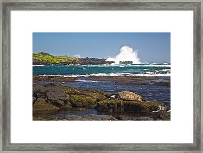 Hawaiian Green Sea Turtle  Framed Print by James Walsh
