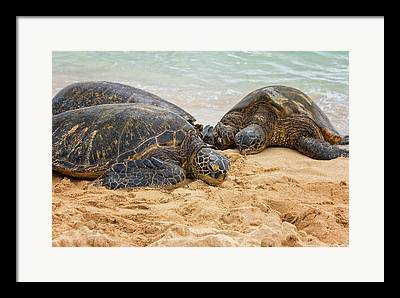 Endangered Hawaiian Species Framed Prints