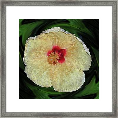 Hawaiian Hybiscus Framed Print