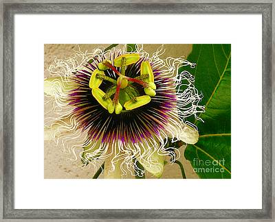 Hawaiian Lilikoi Framed Print