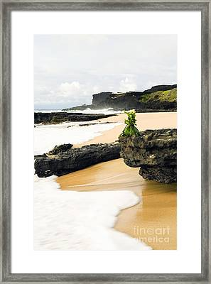 Hawaiian Offering On Beach Framed Print by Dana Edmunds - Printscapes